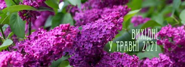 Free picture (Lilac blooms) from https://torange.biz/lilac-blooms-37377